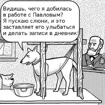 Собака выработала у Павлова рефлекс.