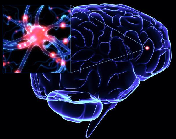 Головной мозг, нейроны