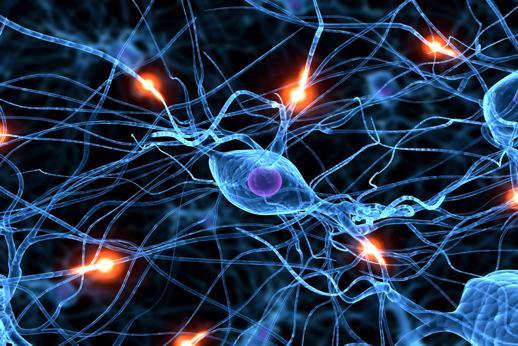 нейронные сети в головном мозге